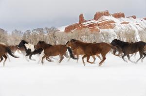 Snow Run III by PHBurchett