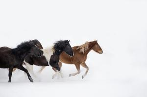Snow Run IV by PHBurchett