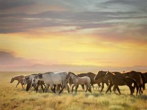 Sunkissed Horses I by PHBurchett