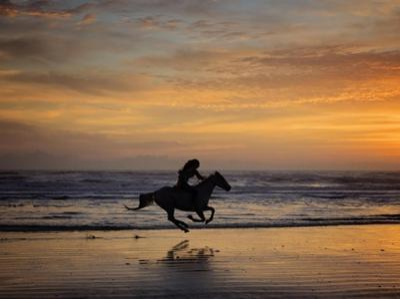 Sunkissed Horses IV by PHBurchett