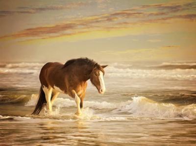 Sunkissed Horses V by PHBurchett