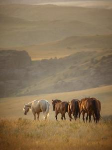 Sunkissed Horses VI by PHBurchett