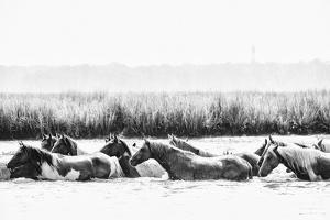 Water Horses III by PHBurchett