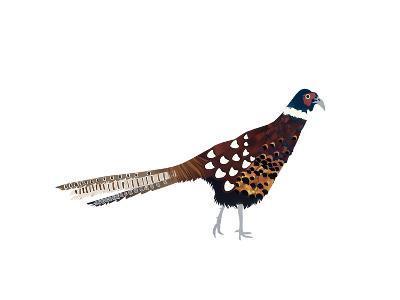 Pheasant, 2013-Isobel Barber-Giclee Print
