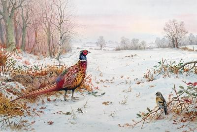 Pheasant and Bramblefinch in the Snow-Carl Donner-Giclee Print
