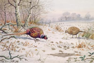 Pheasant and Partridge Eating-Carl Donner-Giclee Print