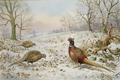 Pheasant and Partridges in a Snowy Landscape-Carl Donner-Giclee Print