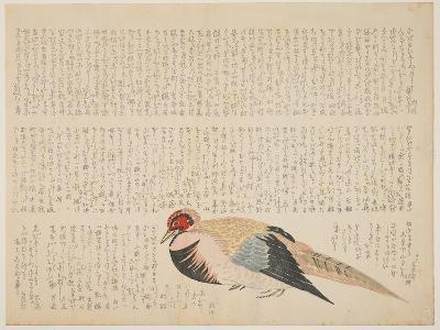 Pheasant, C.1818-29--Giclee Print