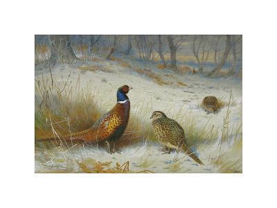 Pheasant in Winter-Archibald Thorburn-Premium Giclee Print