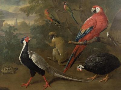 Pheasant, Macaw, Monkey, Parrots and Tortoise-Charles Collins-Giclee Print
