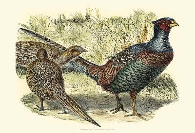 Pheasant Varieties I--Art Print
