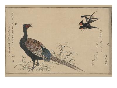 Pheasant--Art Print