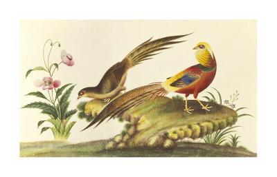 Pheasants--Premium Giclee Print