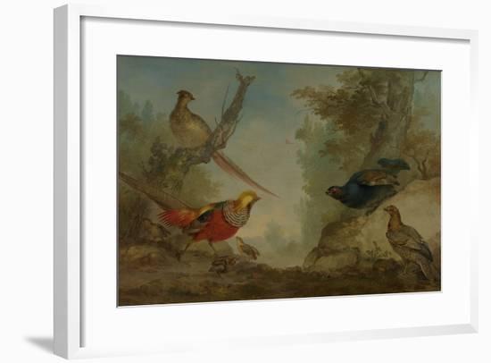 Pheasants-Aert Schouman-Framed Premium Giclee Print