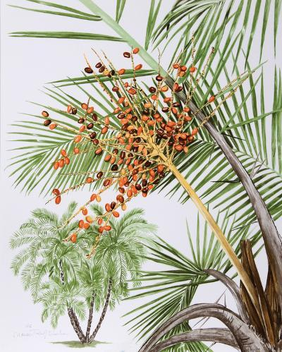 Pheonix Palm-Marion Sheehan-Collectable Print