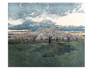 Cherry Grove by Phil Greenwood