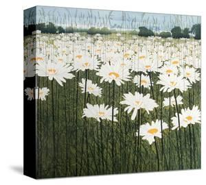 Daisy by Phil Greenwood