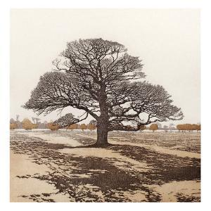 Dark Oak by Phil Greenwood