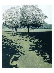 Dawn Shade by Phil Greenwood