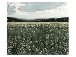 Marsh Grass by Phil Greenwood