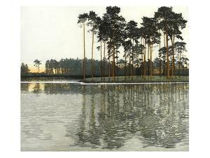 Pine Light by Phil Greenwood