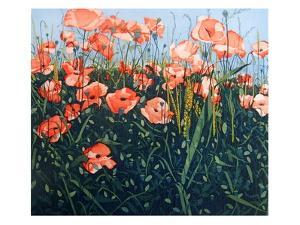 Poppy by Phil Greenwood