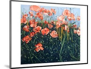 Poppy by Phil Greenwood
