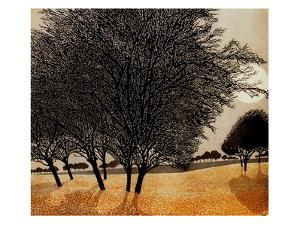 Primrose Morn by Phil Greenwood