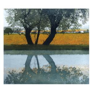 Reflections by Phil Greenwood