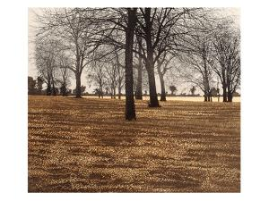 Season Of Mist by Phil Greenwood