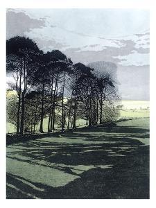 Shadowfield by Phil Greenwood
