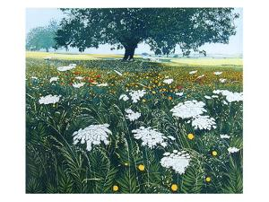 Spanish Fields by Phil Greenwood
