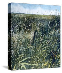 Storm Grass by Phil Greenwood