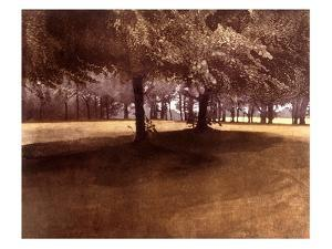 Summer Light by Phil Greenwood