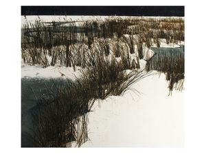 White Marsh by Phil Greenwood