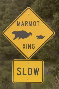A Marmot Crossing Sign in Great Basin National Park by Phil Schermeister
