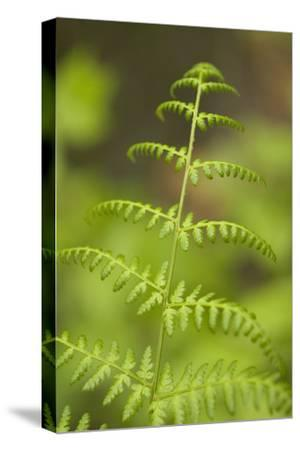 """A Plant Grows at the Noah """"Bud"""" Ogle Place Along the Roaring Fork Motor Nature Trail"""