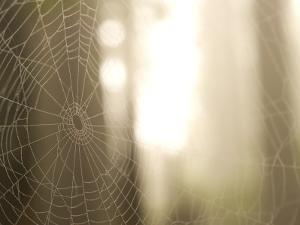 Backlit View of Part of a Spider Web by Phil Schermeister
