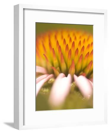 Magnification of a Purple Coneflower Plant Shot in the Grasslands