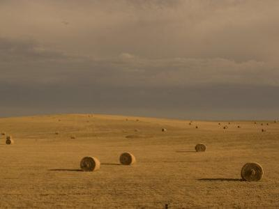 Rolled Up Bales of Hay in a Field Near Mud Butte, South Dakota by Phil Schermeister