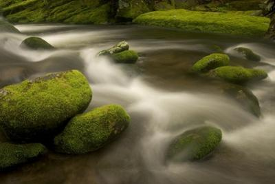 The Roaring Fork River Along the Nature Trail in Great Smoky Mountains National Park by Phil Schermeister