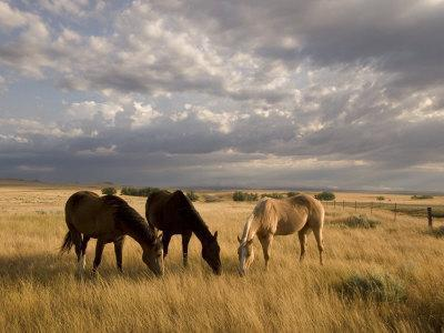 Three Horses Grazing in Grand River National Grasslands, South Dakota