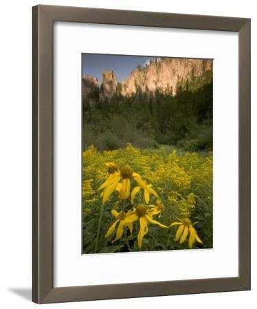Yellow Wildflowers Growing in Spearfish Canyon, South Dakota