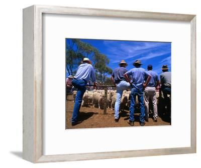 Buyers Watch Intently at Sheep Auction in Rural Victoria, Victoria, Australia