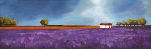 Field of lavender by Philip Bloom
