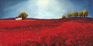 Field of poppies by Philip Bloom