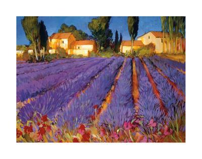 Late Afternoon, Lavender Fields