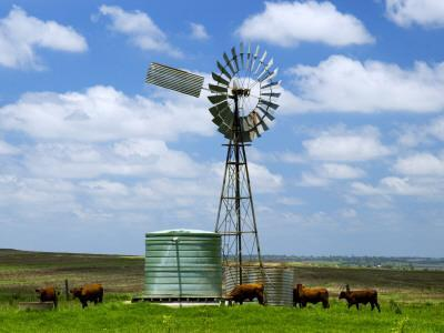 Watering Cattle Beneath Windmill on Darling Downs, Southern Queensland