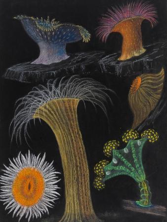 Anemones and Stalked Jellyfish
