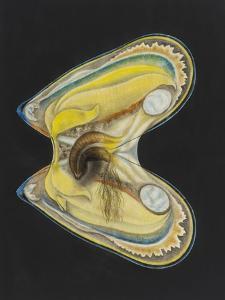Mussel by Philip Henry Gosse